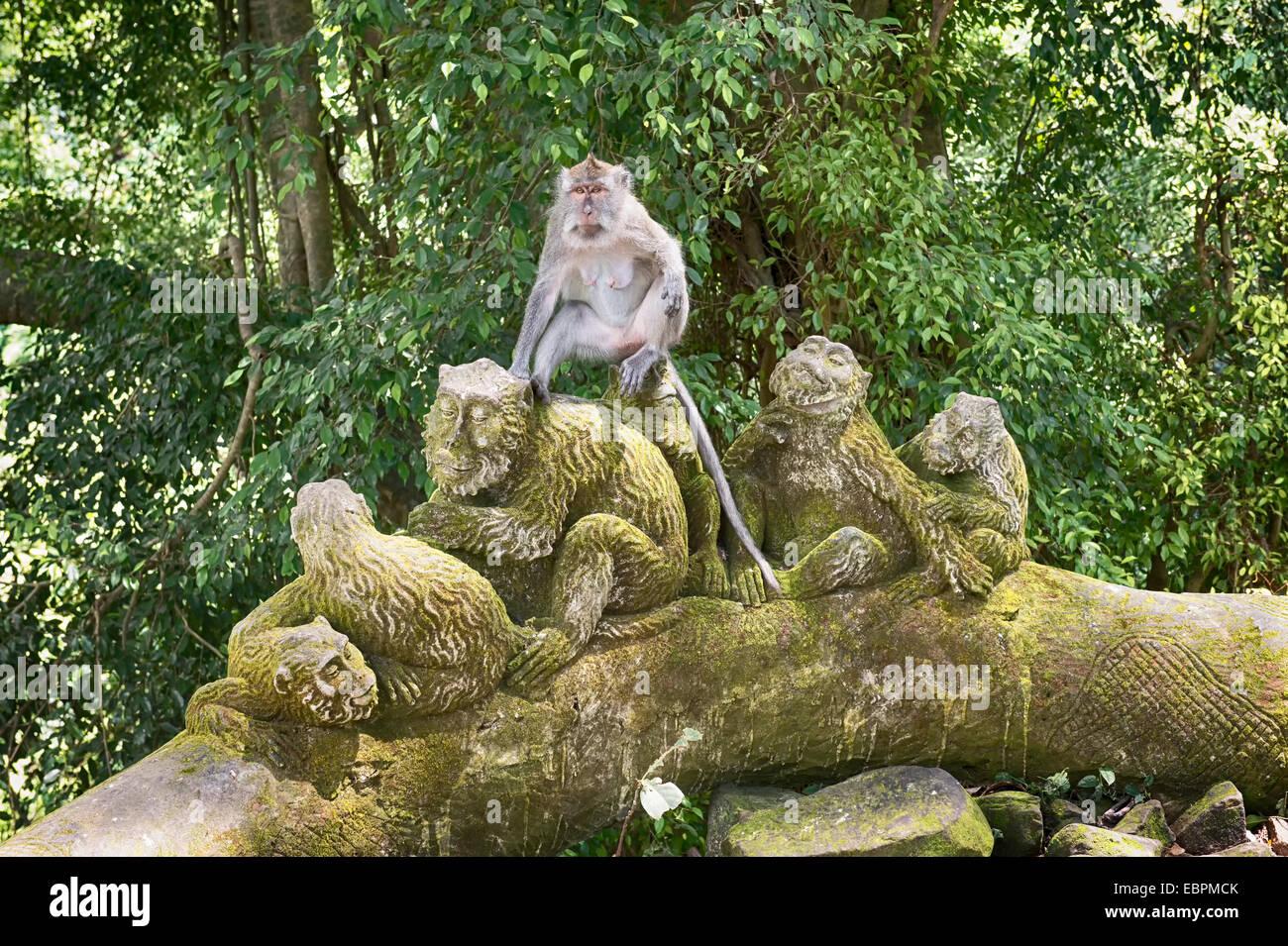 Sacred Monkey Forest, Ubud, Bali, Indonesia, Southeast Asia, Asia - Stock Image