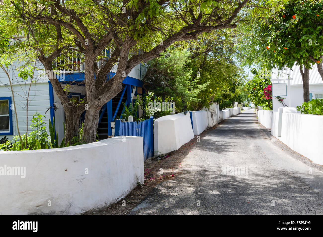 Street with trees, Cockburn Town, Grand Turk, Turks and Caicos, West Indies, Caribbean - Stock Image