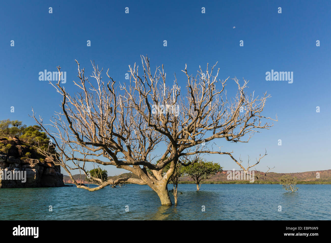 Extreme high tide covers trees in the Hunter River, Kimberley, Western Australia, Australia, Pacific - Stock Image