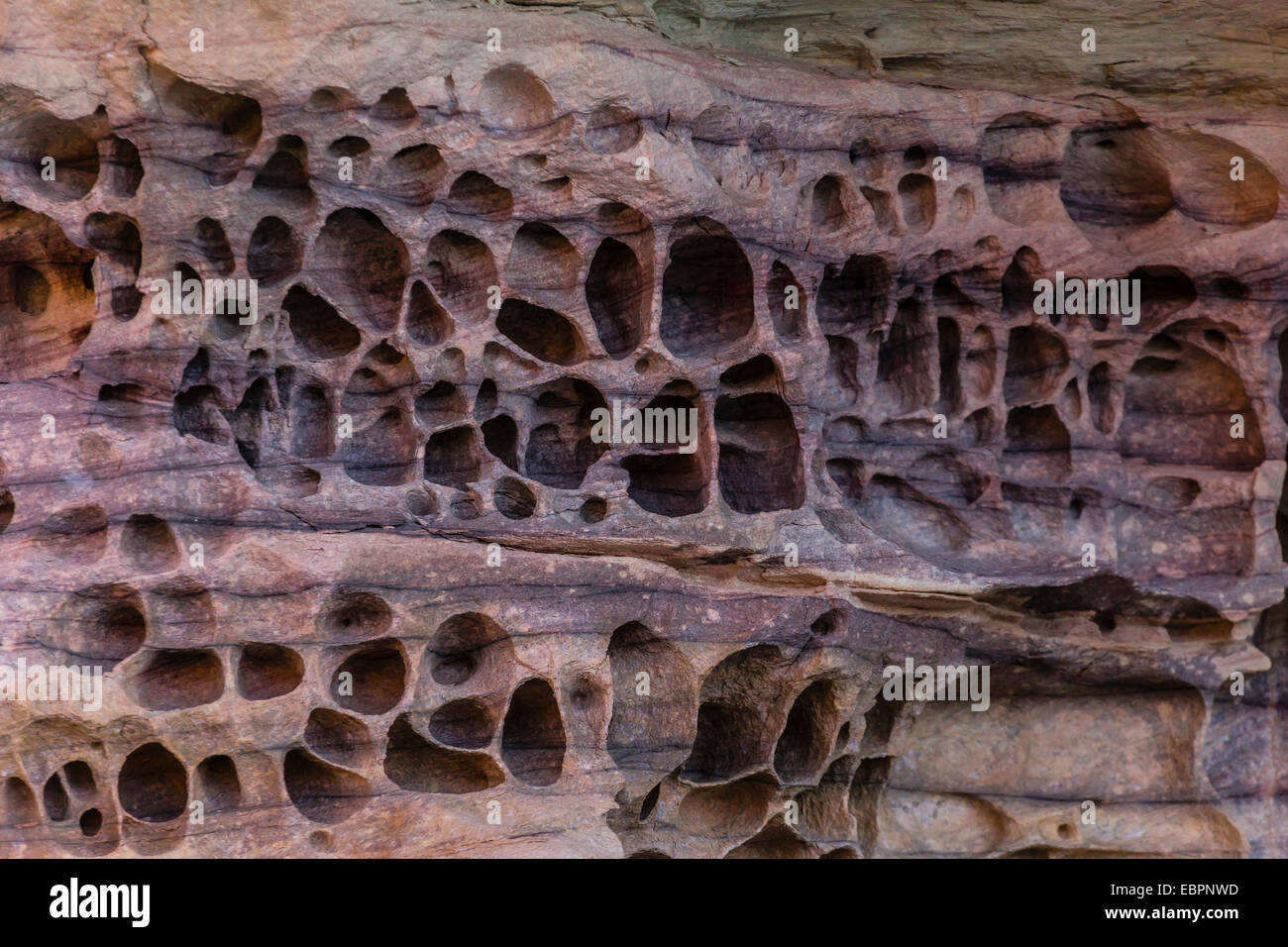 Detail of wind and water erosion in the sandstone cliffs of the King George River, Koolama Bay, Kimberley, Australia - Stock Image