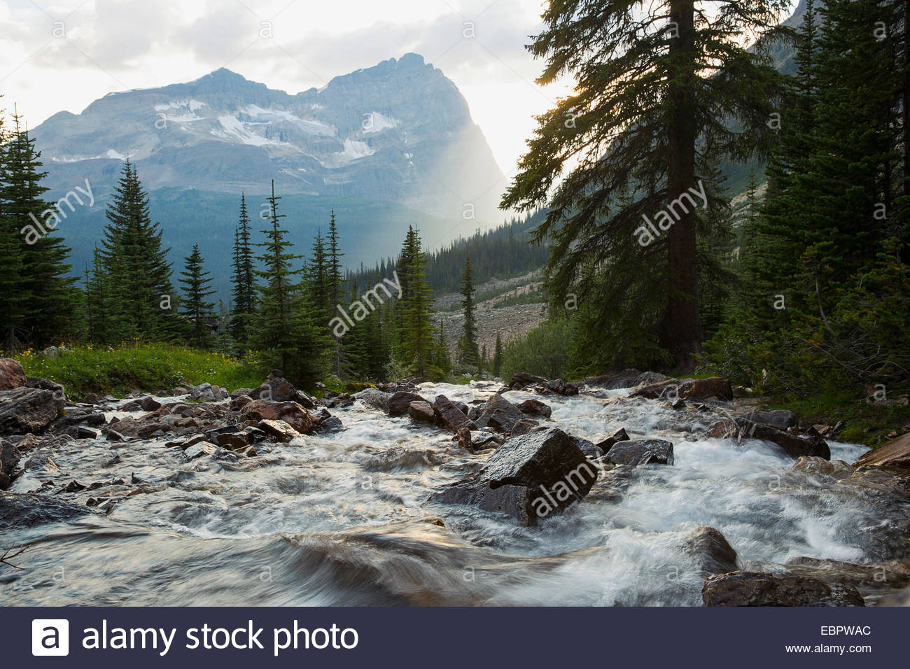 Rushing Kicking Horse river below majestic mountain - Stock Image