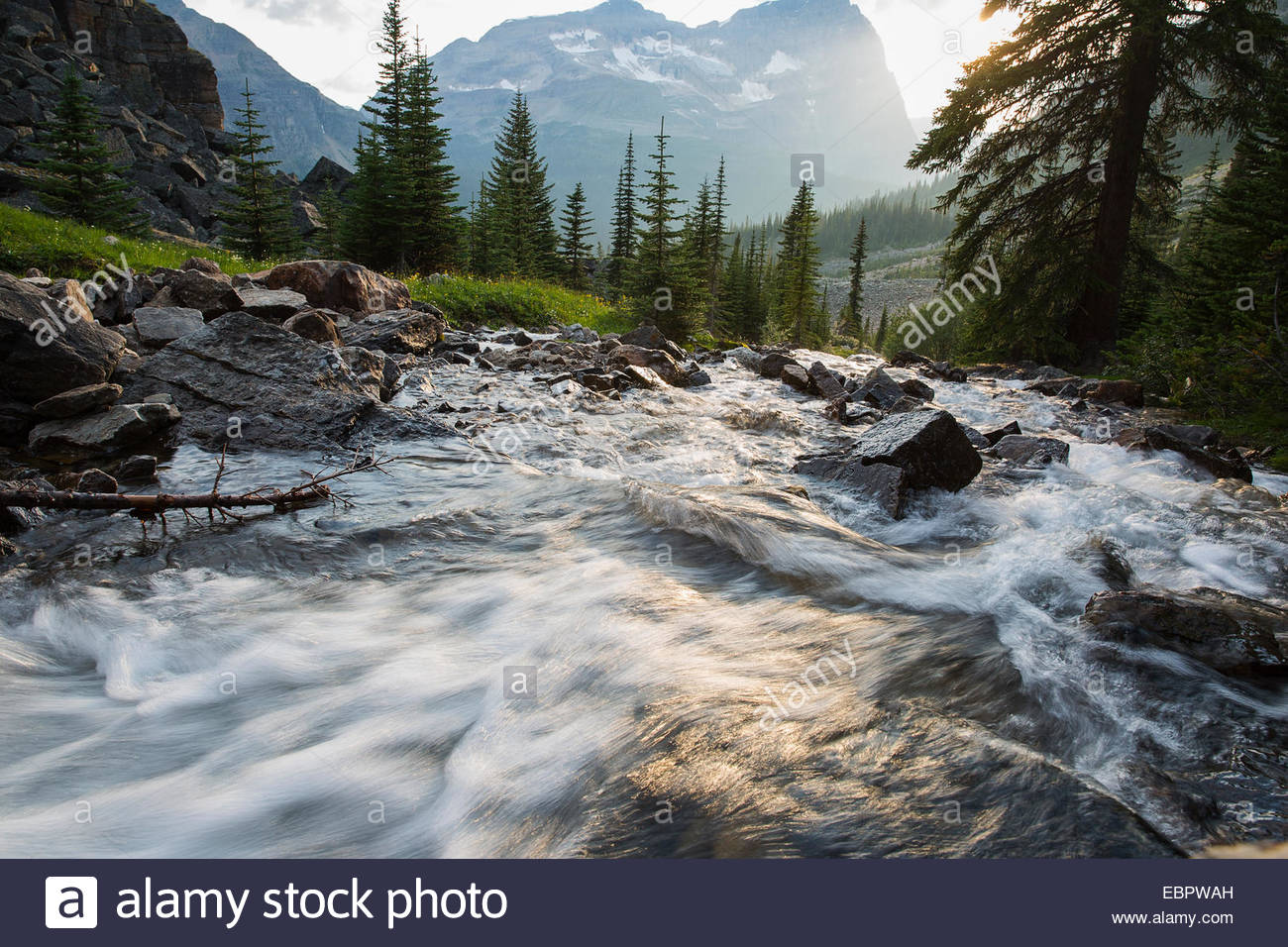 Rushing Kicking Horse river below mountain - Stock Image