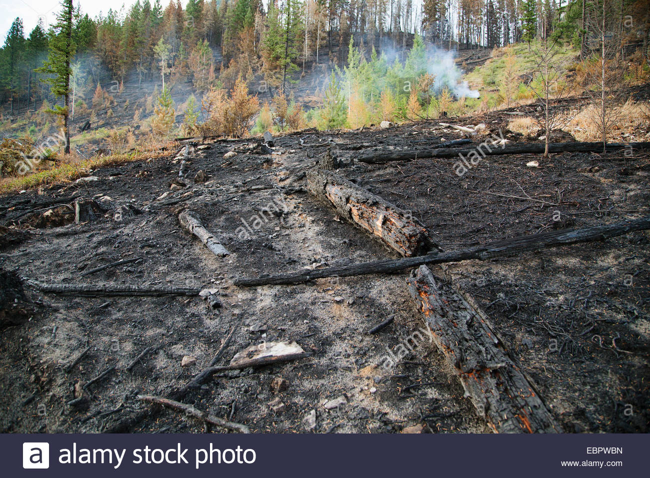Burnt ground due to forest fire damage - Stock Image