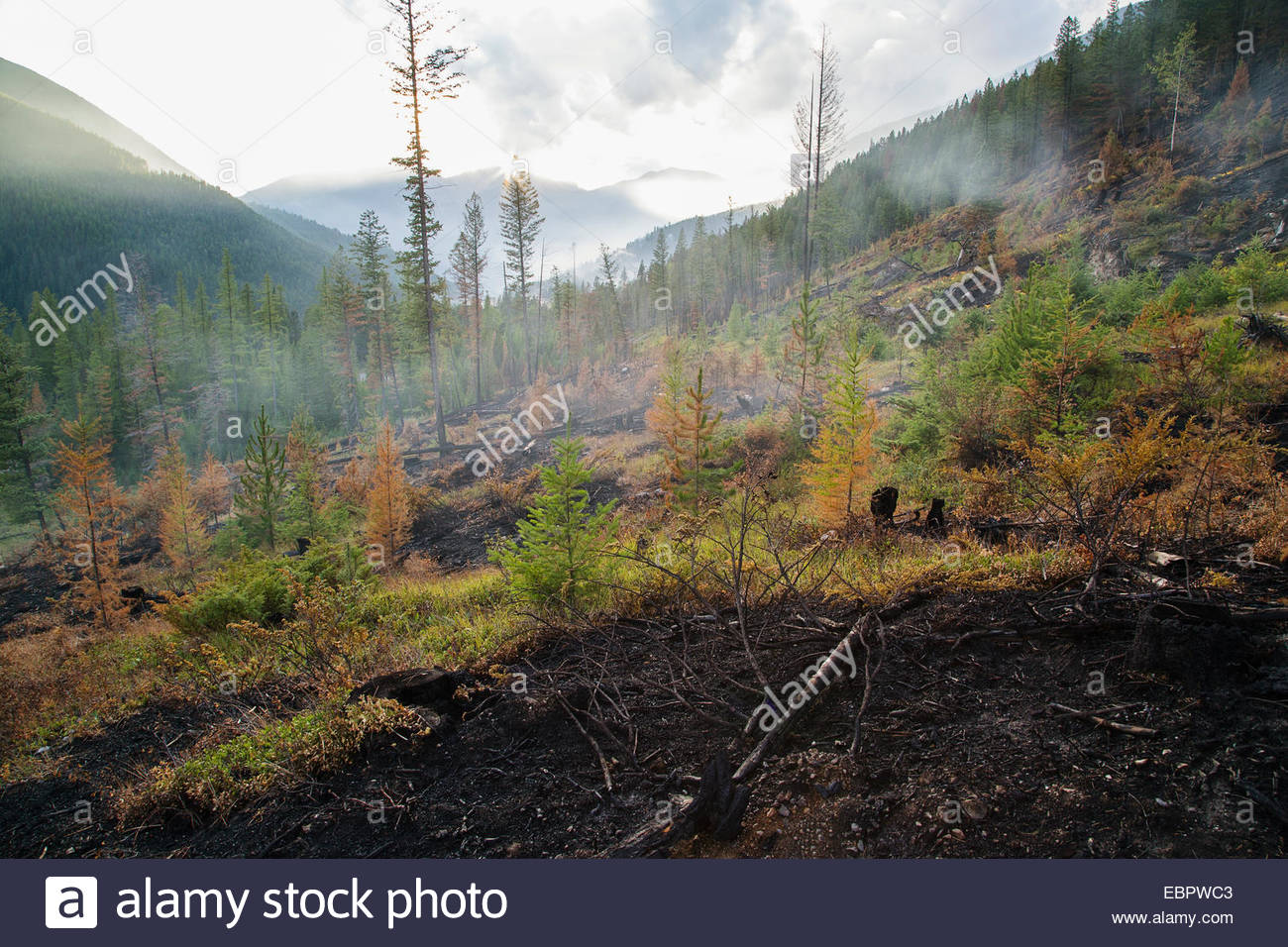 Burnt hillside due to forest fire damage - Stock Image