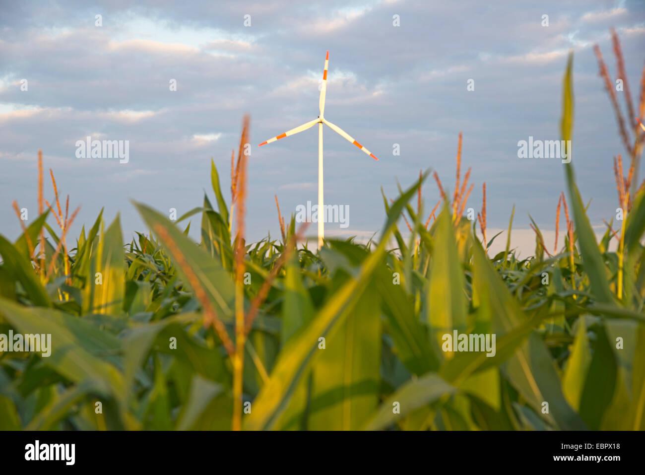 wind wheel and mayze biomass production, Germany, Baden-Wuerttemberg, Swabian Alb, Tomerdingen - Stock Image