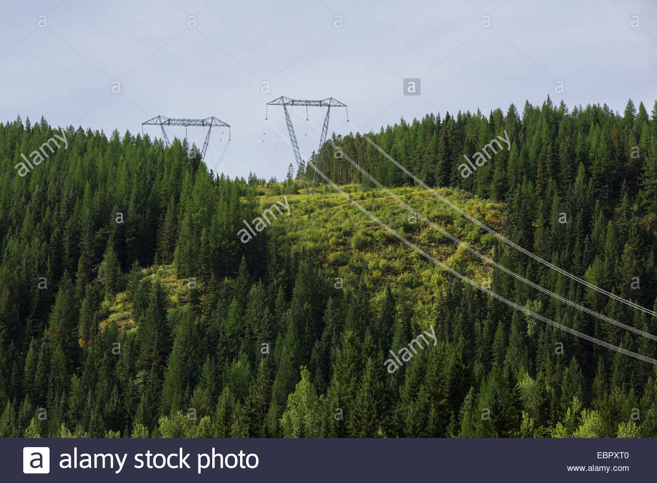 Power lines spanning forest hillside - Stock Image
