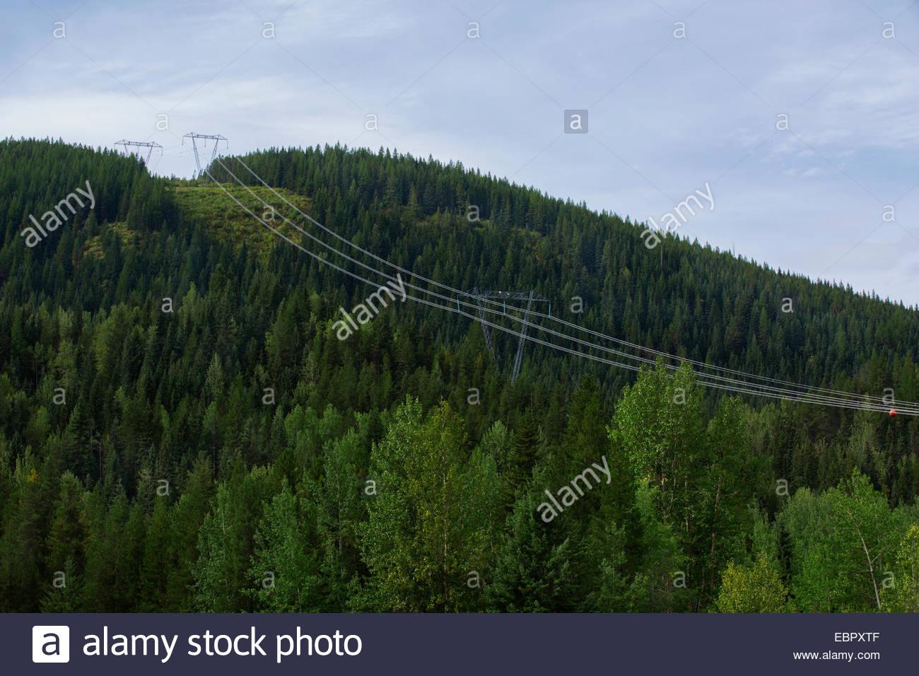 Power lines spanning forest hillside - Stock Image