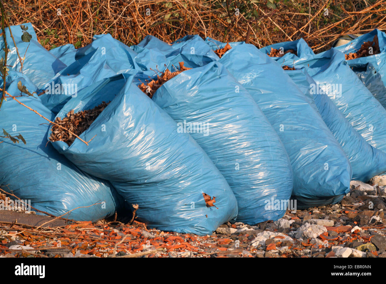 autumn leaves collected in blue rubbish bags, Germany - Stock Image