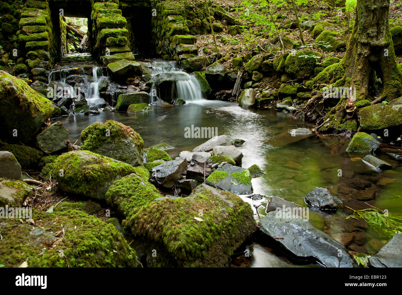 small stream in the forest, Germany, Bavaria, Rhoen Stock Photo