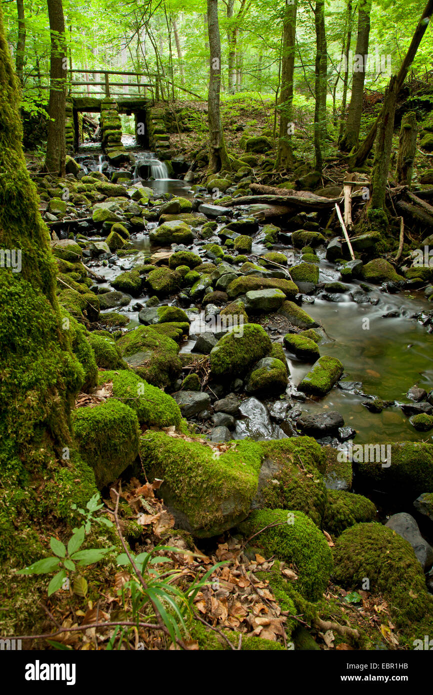 stony forest creek, Germany, Bavaria, Rhoen - Stock Image