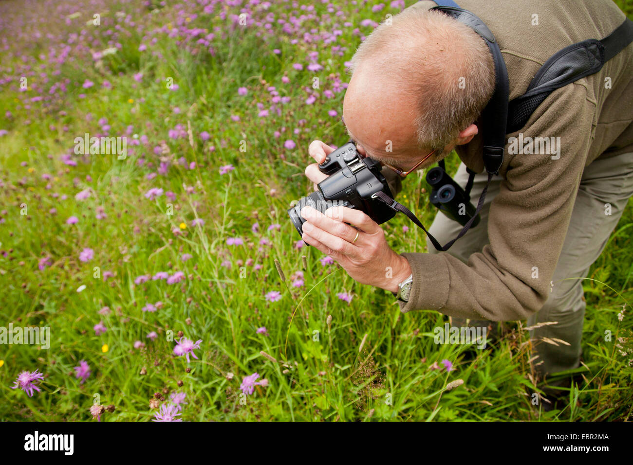 man taking photos of knapweeds in a meadow, Germany, Rhineland-Palatinate - Stock Image
