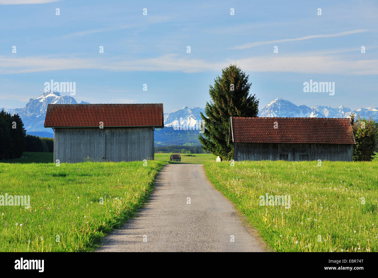 Path with Barns in the Spring, Germany, Bavaria, Allgaeu - Stock Image