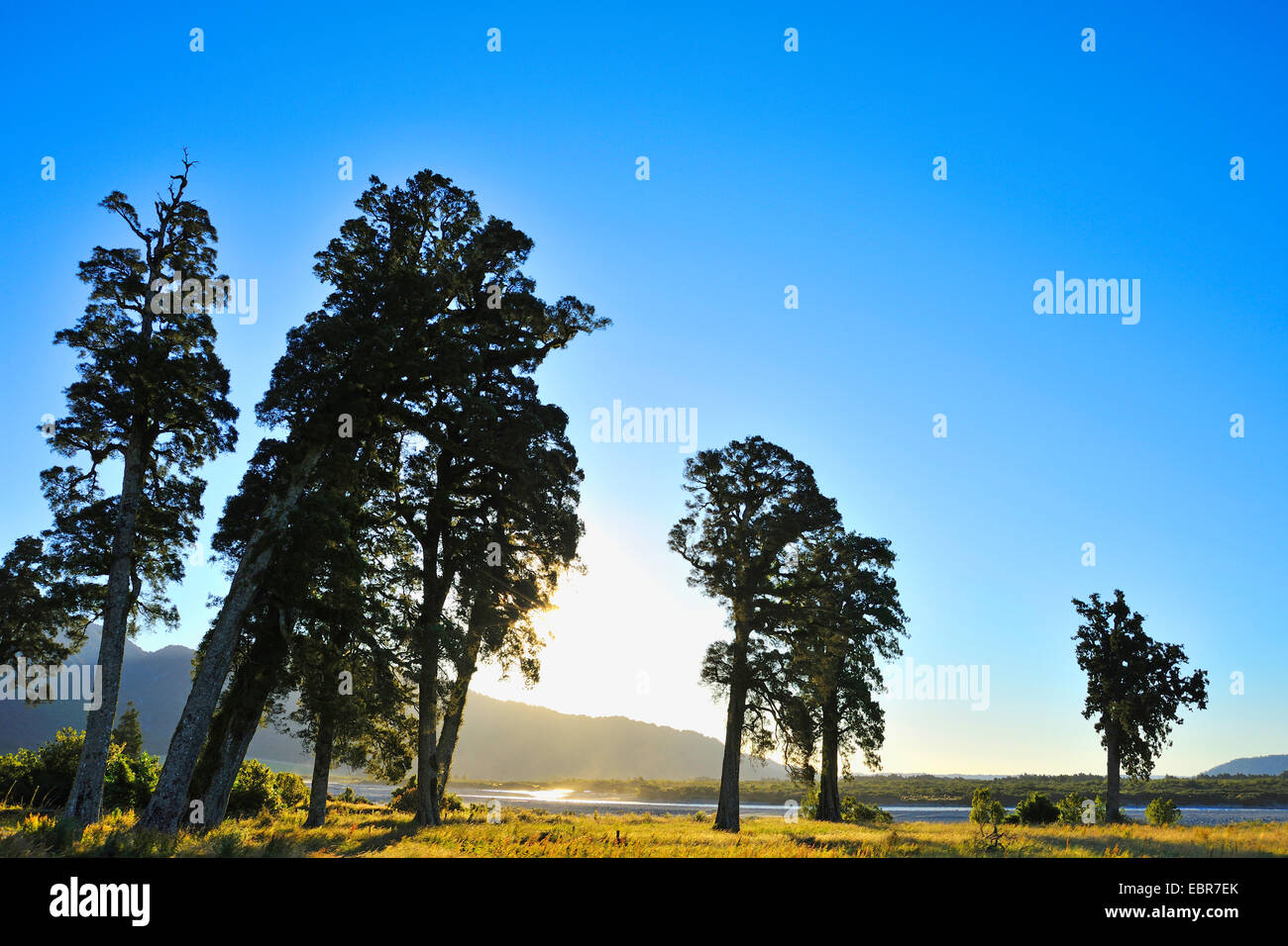 Countryside with Trees in Summer, State Highway 6, Harihari, West Coast, New Zealand, Southern Island - Stock Image