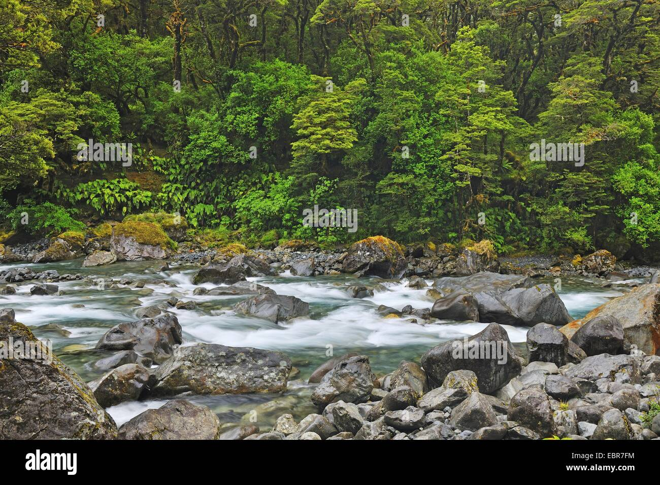 Mountain Stream, Milford Sound , New Zealand, Southern Island, Fjordland National Park - Stock Image