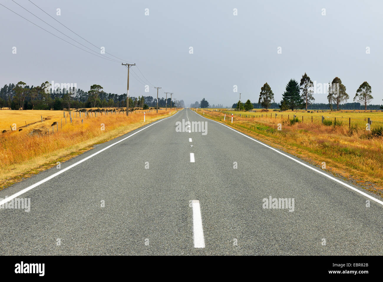 country road in the summer, New Zealand, Southern Island, South Island, Ryal Bush - Stock Image