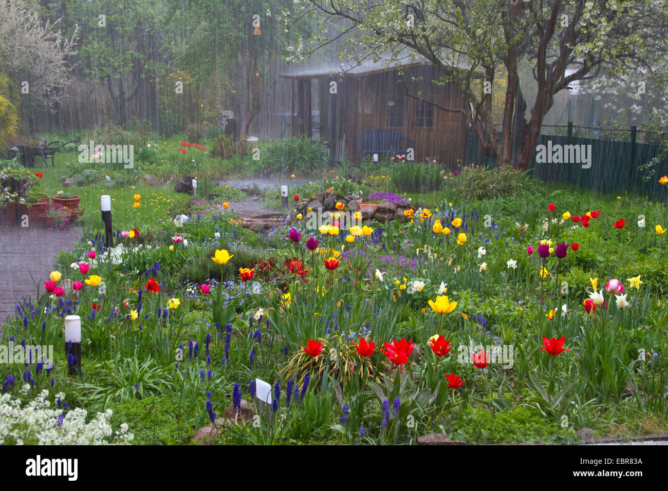 heavy shower with hail in a garden in spring, Germany - Stock Image