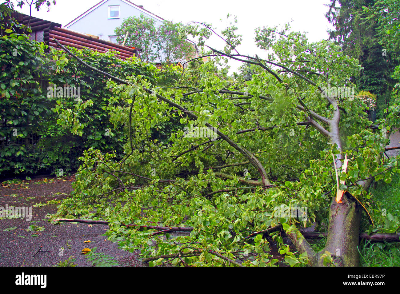 broken branch after squall, Germany - Stock Image