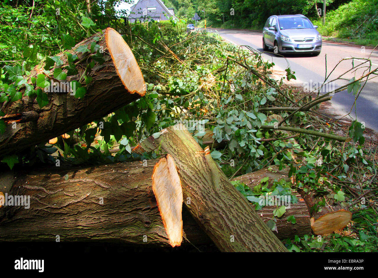 removed trunks of a willow from a street, storm front Ela at 2014-06-09, Germany, North Rhine-Westphalia, Ruhr Area, - Stock Image