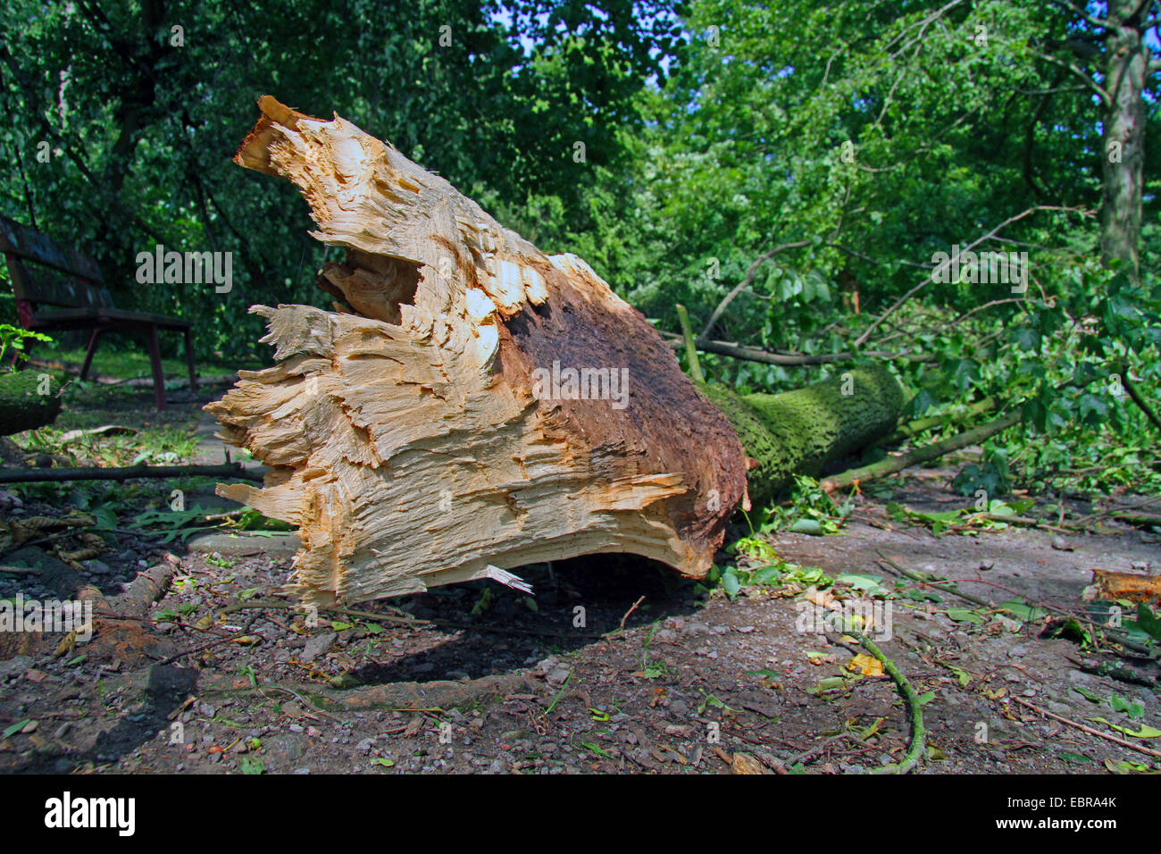 fallen branch after front Ela at 2014-06-09, Germany, North Rhine-Westphalia, Ruhr Area, Essen - Stock Image