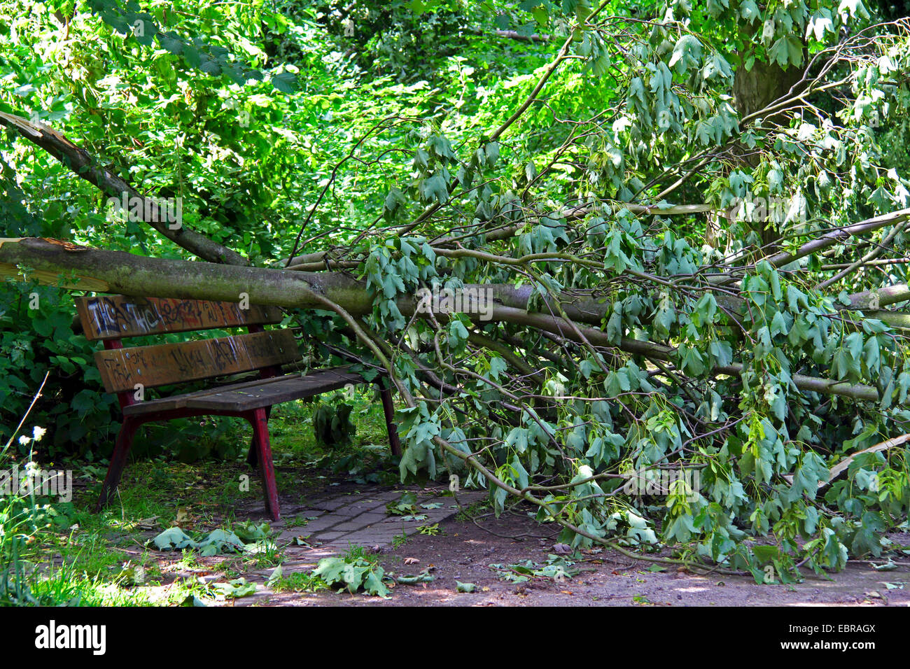 fallen trunk on a park bench, storm front Ela at 2014-06-09, Germany, North Rhine-Westphalia, Ruhr Area, Essen - Stock Image