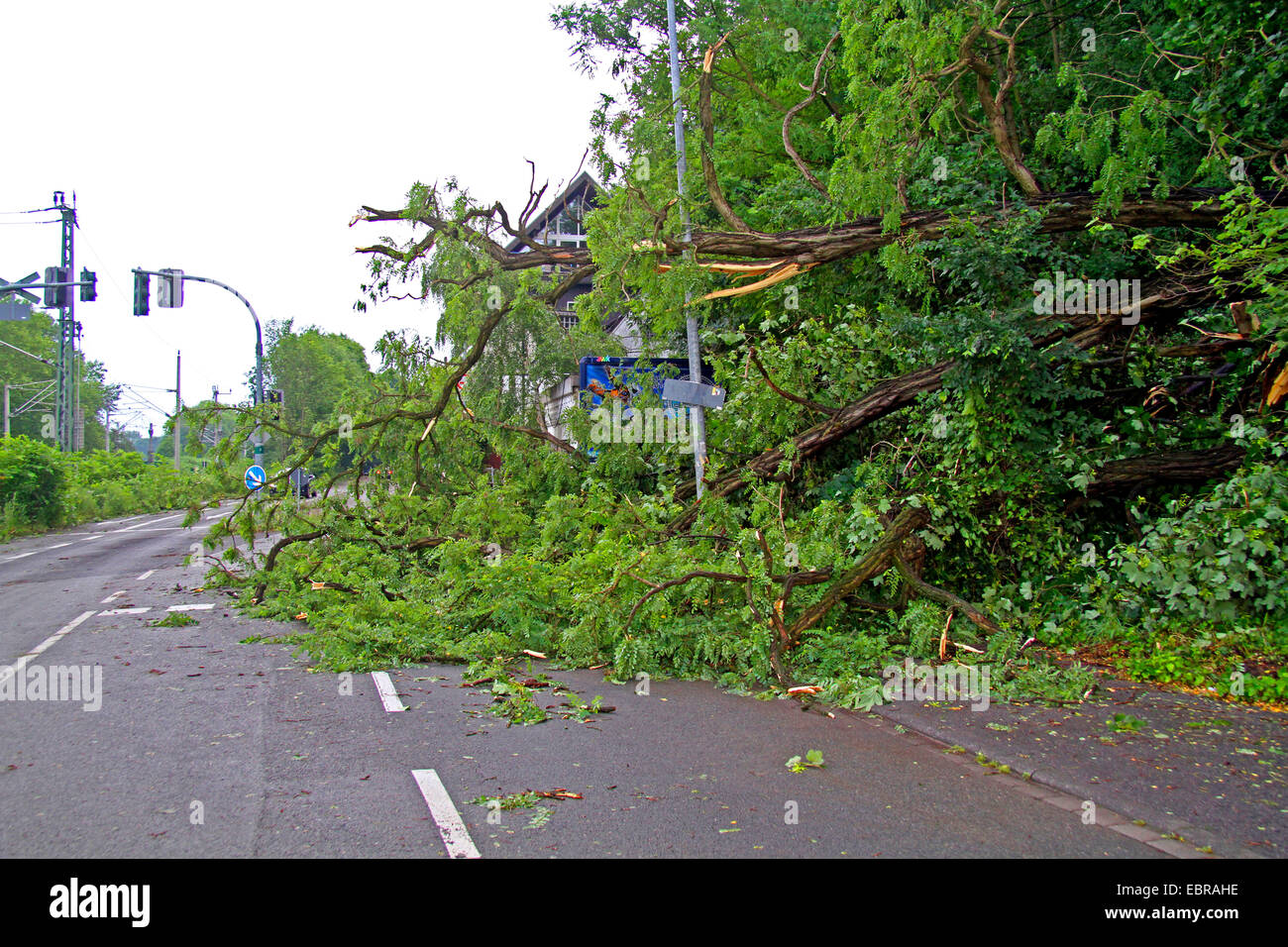 fallen trunk of a robina on a street, storm front Ela at 2014-06-09, Germany, North Rhine-Westphalia, Ruhr Area, - Stock Image