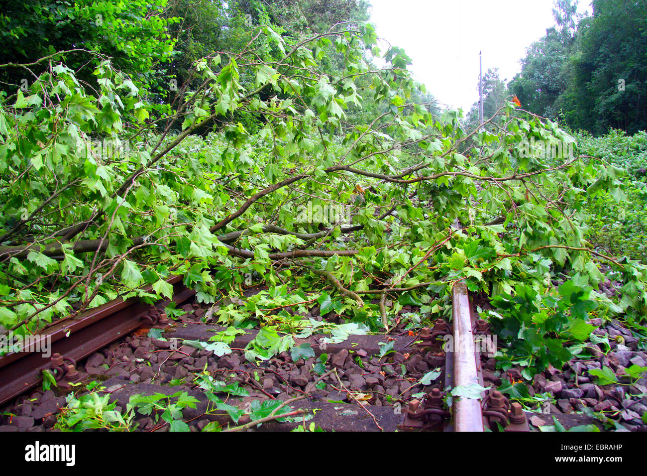 fallen trunk of a maple on a railtrack, storm front Ela at 2014-06-09, Germany, North Rhine-Westphalia, Ruhr Area, - Stock Image