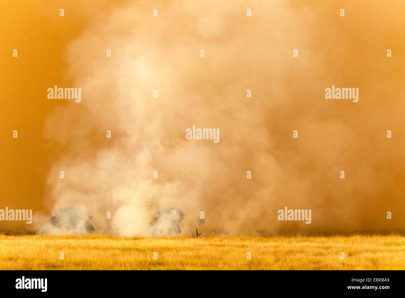 fire in savannah, Kenya, Masai Mara National Park - Stock Image
