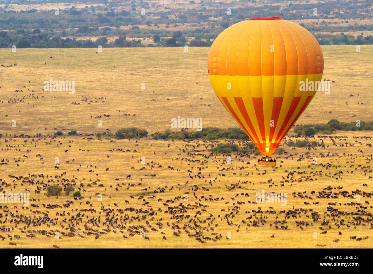 balloon safari at the Masai Mara in the morning, Kenya, Masai Mara National Park - Stock Image