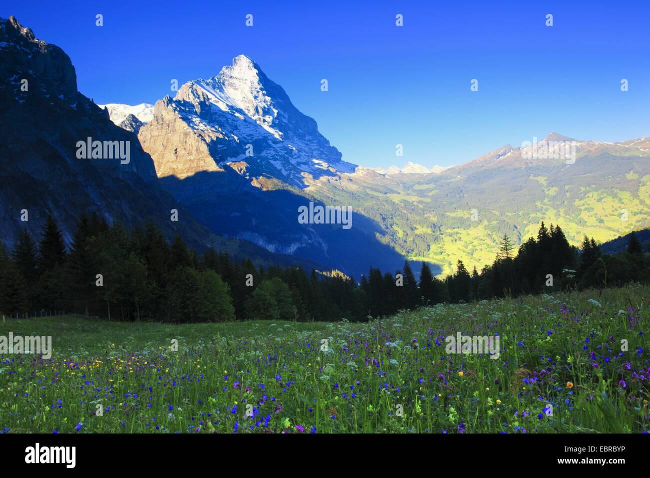 the sunlit Eiger under a clear blue sky, Switzerland, Berne, Grindelwald - Stock Image