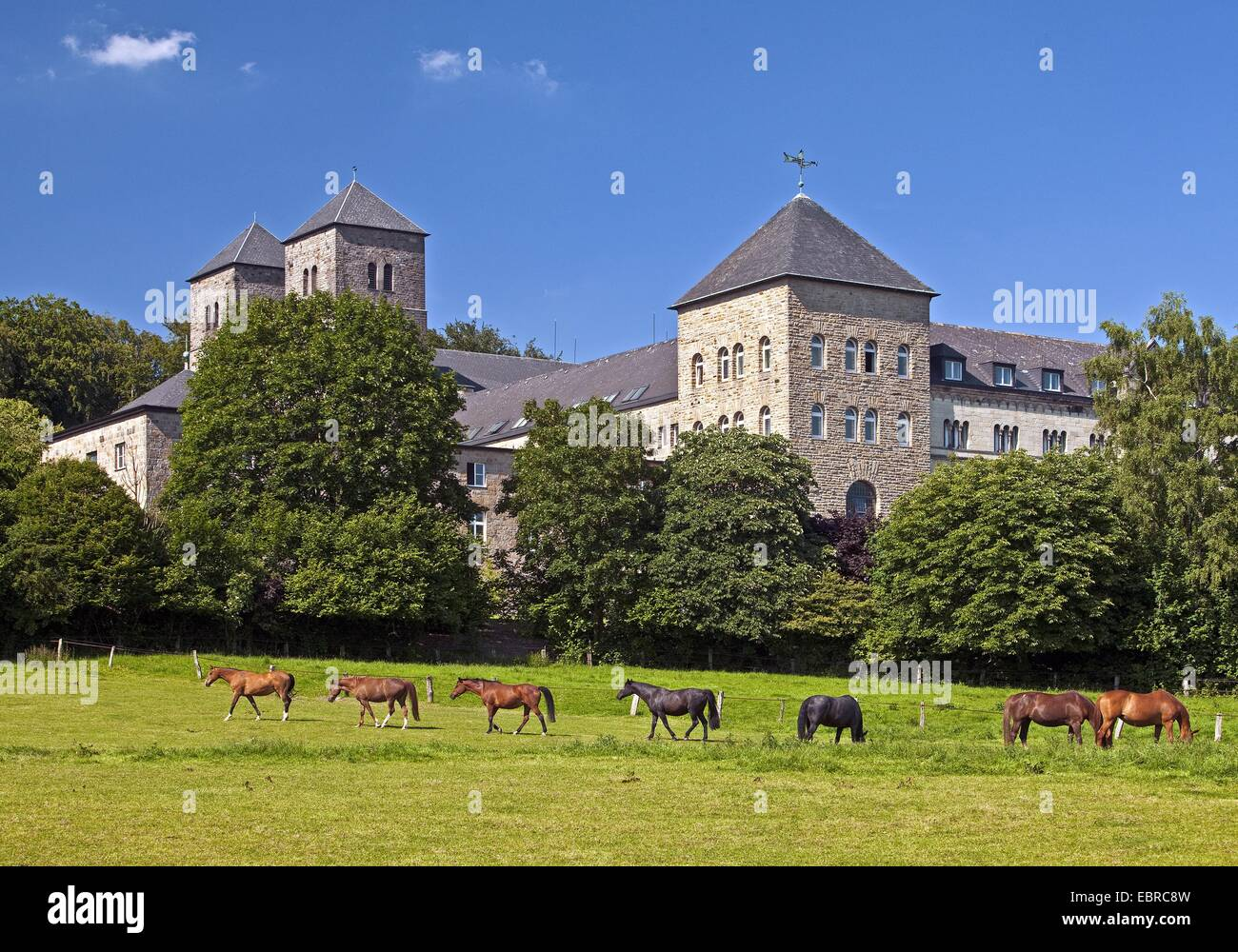 domestic horse (Equus przewalskii f. caballus), horses grazing in front of the Benedictine monastery Gerleve, Germany, - Stock Image