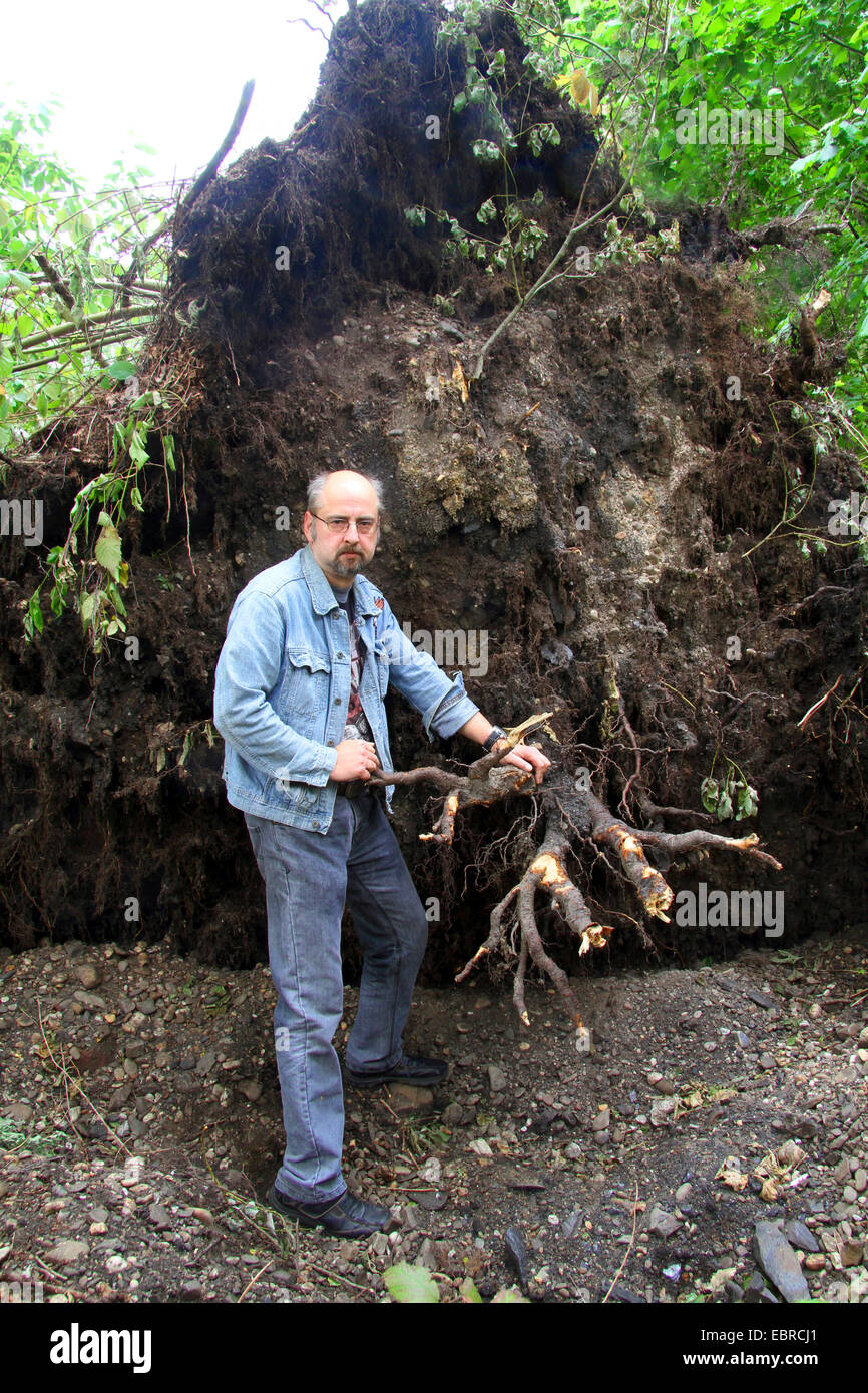 man standing in front of root system of a disrooted birch, storm front Ela at 2014-06-09, Germany, North Rhine-Westphalia, - Stock Image