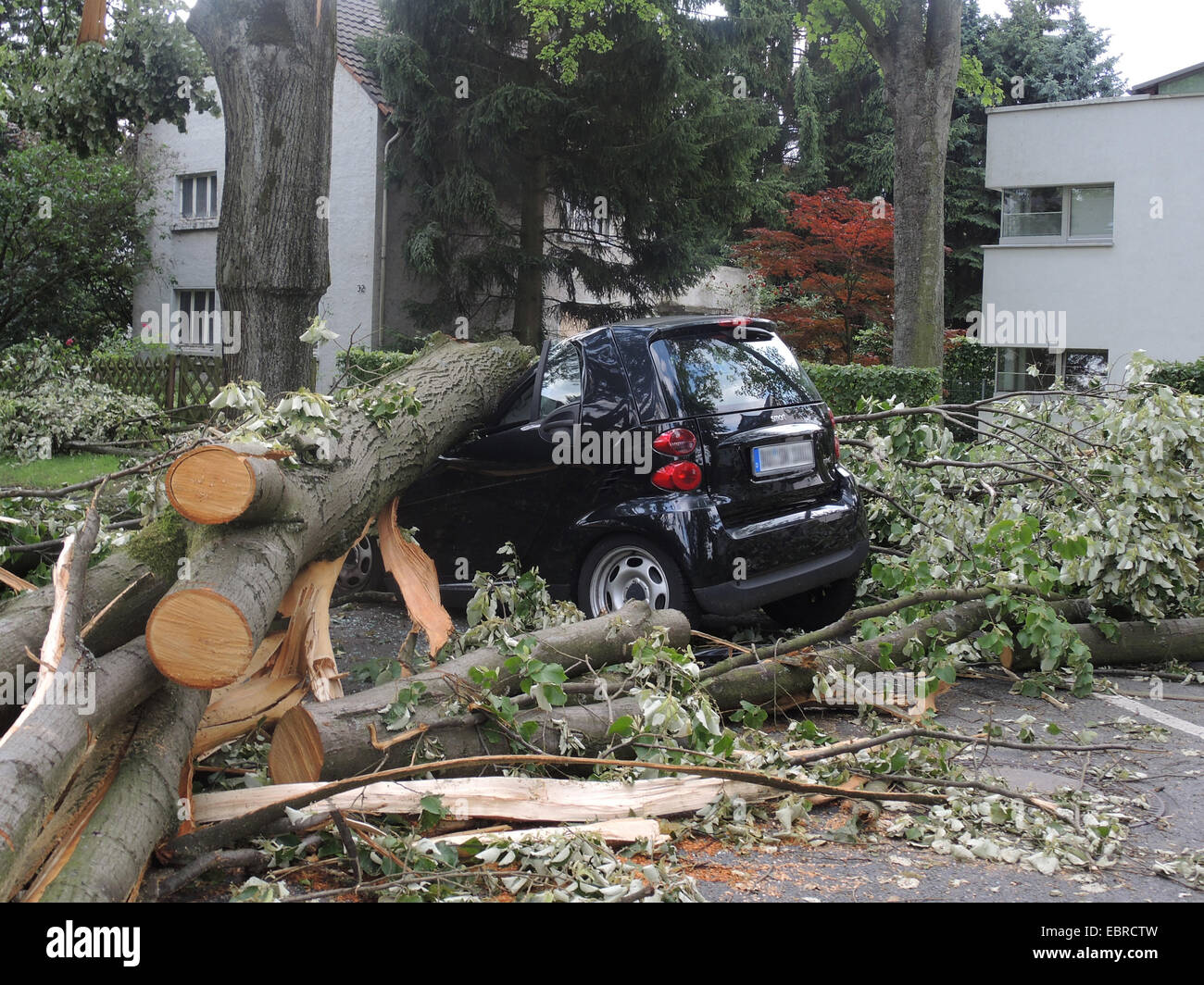 tree fallen on parked car, damages by storm front Ela at 2014-06-09, Germany, North Rhine-Westphalia, Ruhr Area, - Stock Image