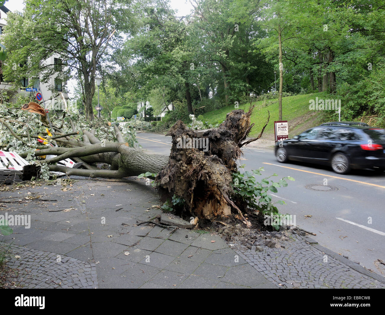 basswood, linden, lime tree (Tilia spec.), fallen lime tree blocking a street, damages by storm front Ela at 2014 - Stock Image