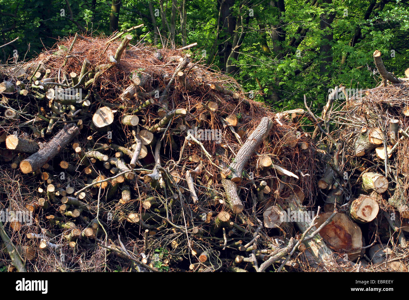 boughs and stems after a clearing in the forest, Germany - Stock Image