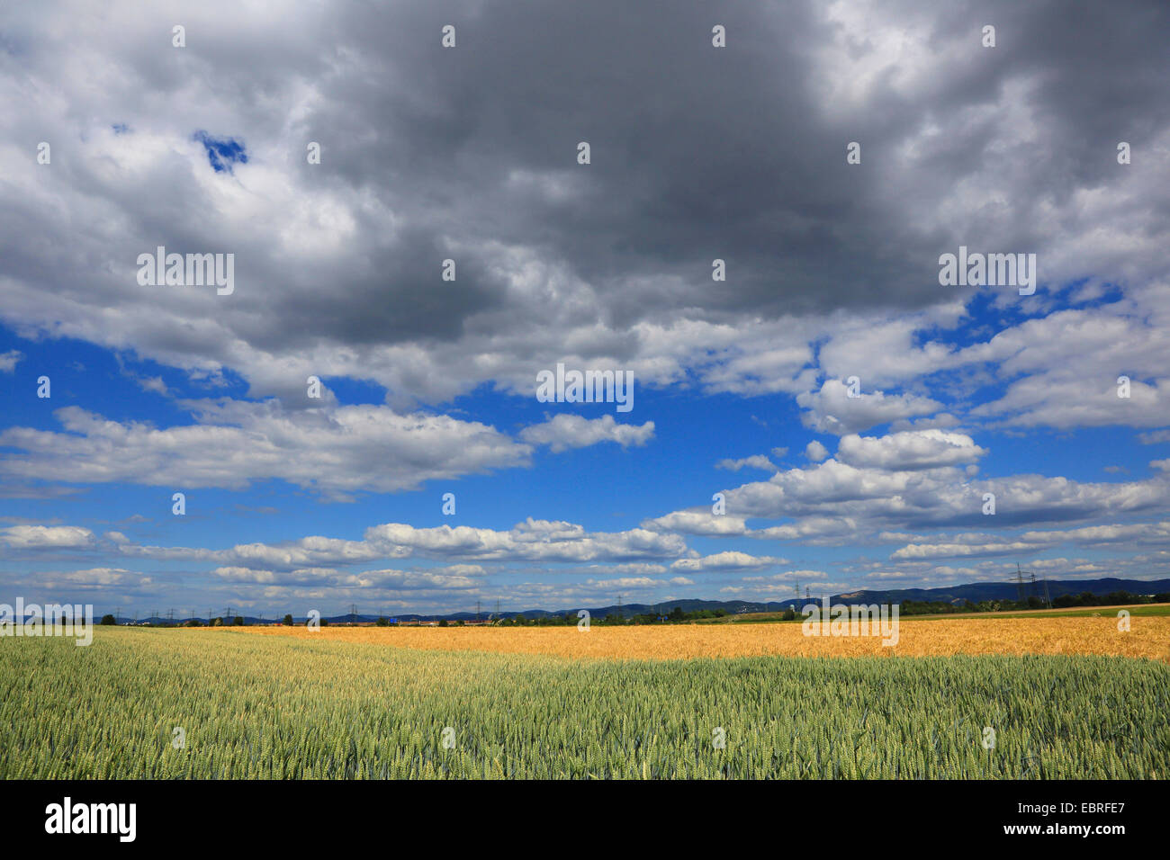 wheatfield with clouds in summer, Germany - Stock Image