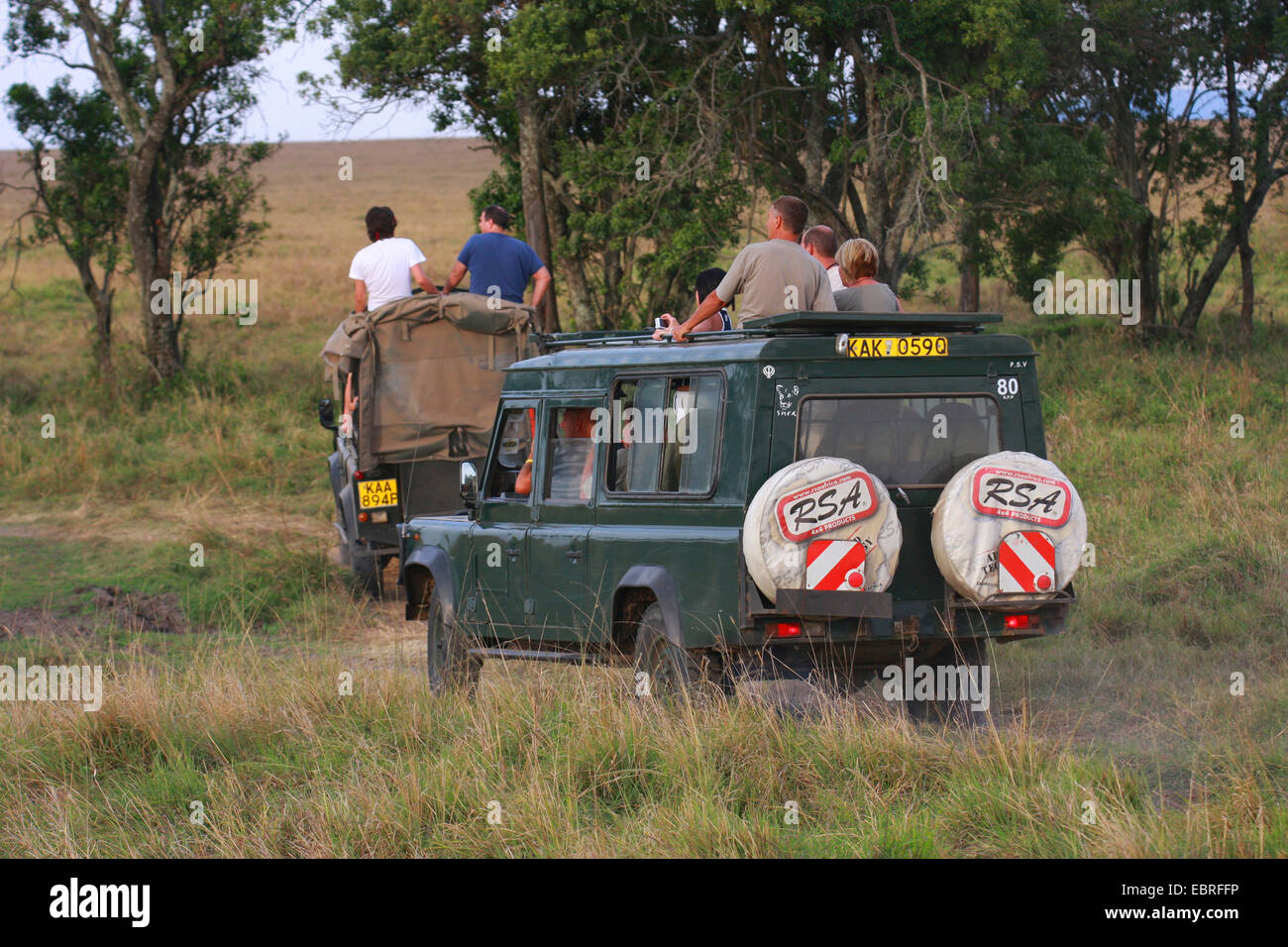 safari tour in the savannah, Kenya, Masai Mara National Park - Stock Image