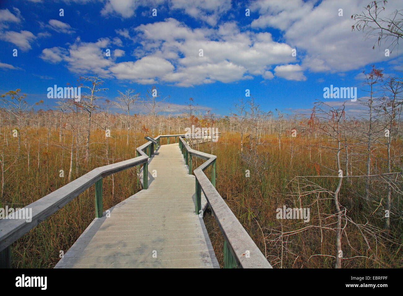 boarded footpath in the Everglades National Park, USA, Florida, Everglades National Park - Stock Image