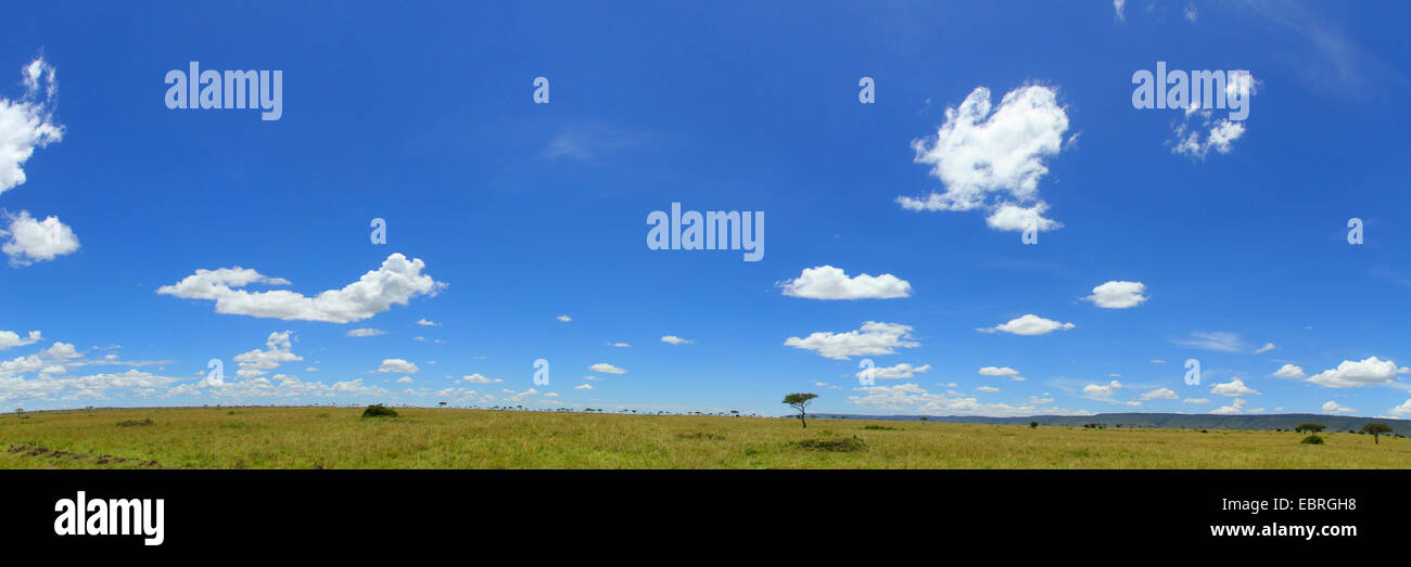 savannah at Masai Mara, Kenya, Masai Mara National Park - Stock Image