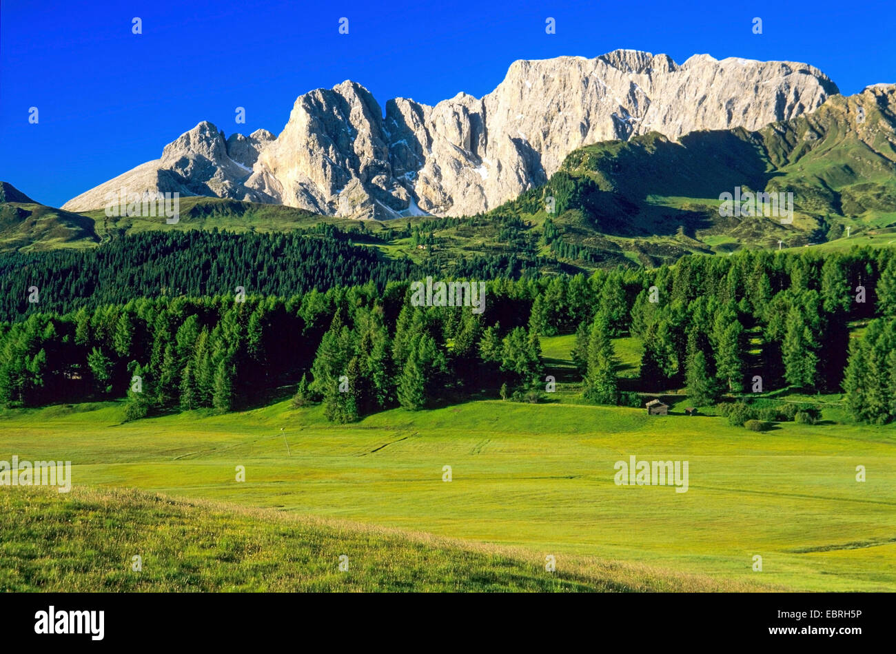 view from Seiser Alp to Rosengarten, Italy, South Tyrol, Dolomites - Stock Image