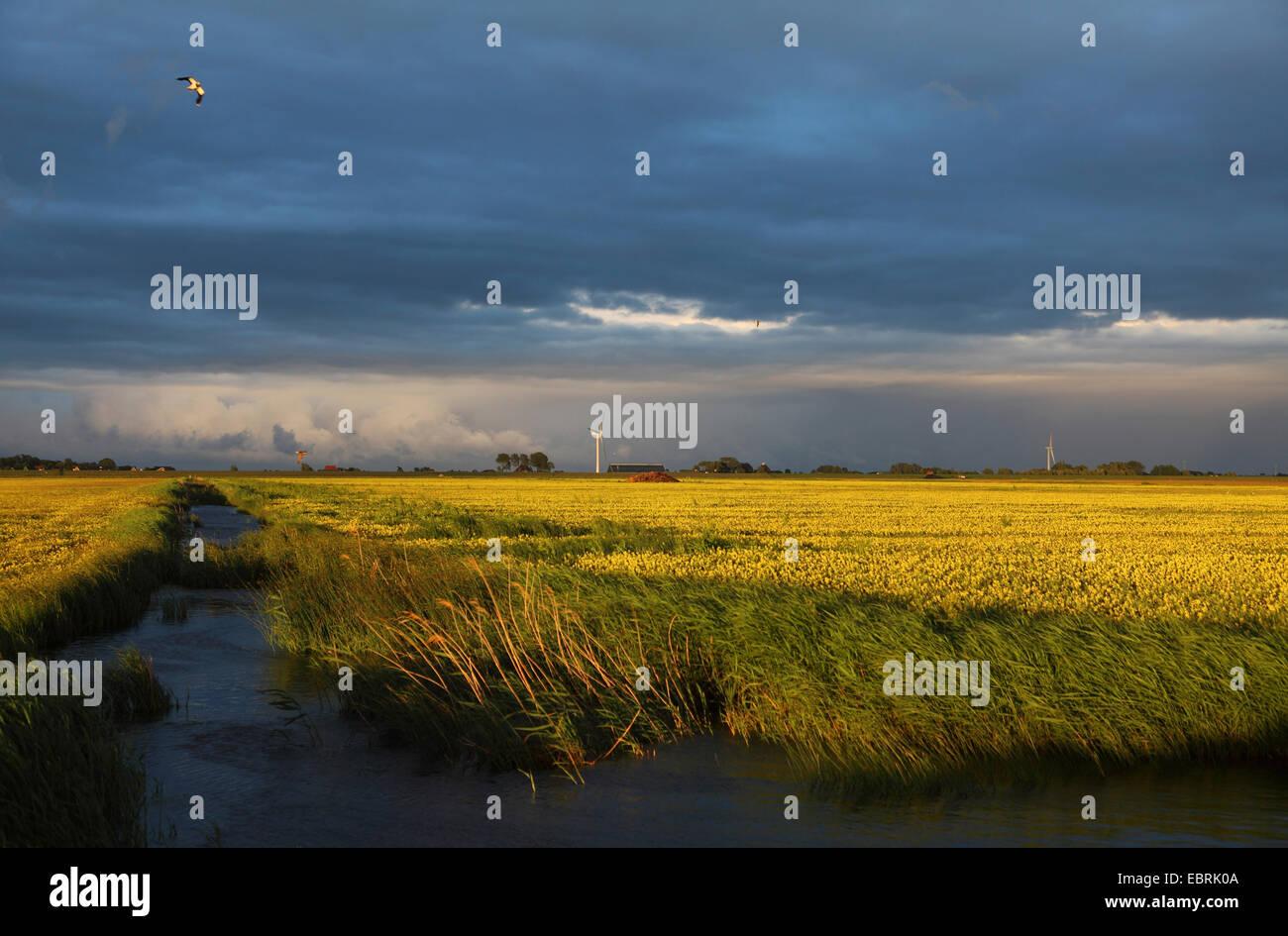 Workum Waard, evening mood after rainfall, Netherlands, Frisia - Stock Image