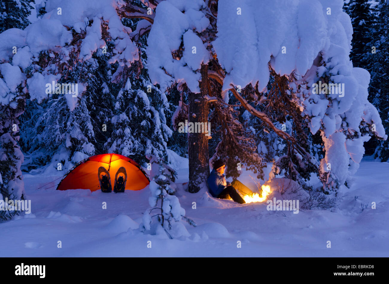 man in snowy landscape sitting at campfire under coniferous tree next to illuminated tent, Norway, Hedmark Fylke, - Stock Image