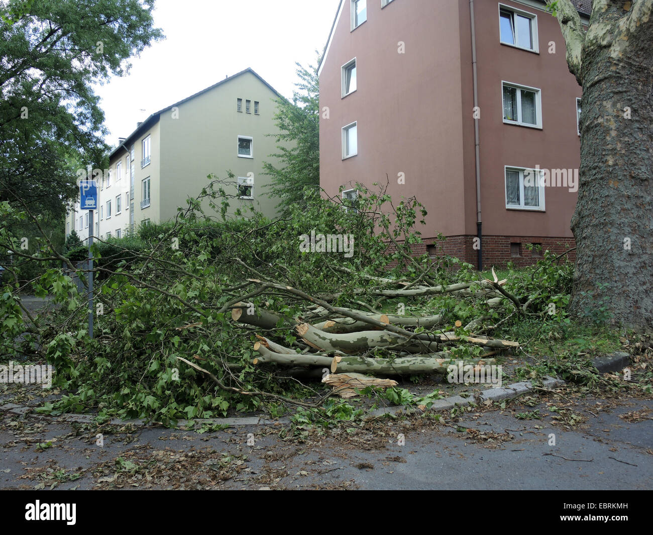 street after the storm front Ela at 2014-06-09, Germany, North Rhine-Westphalia, Ruhr Area, Bochum - Stock Image