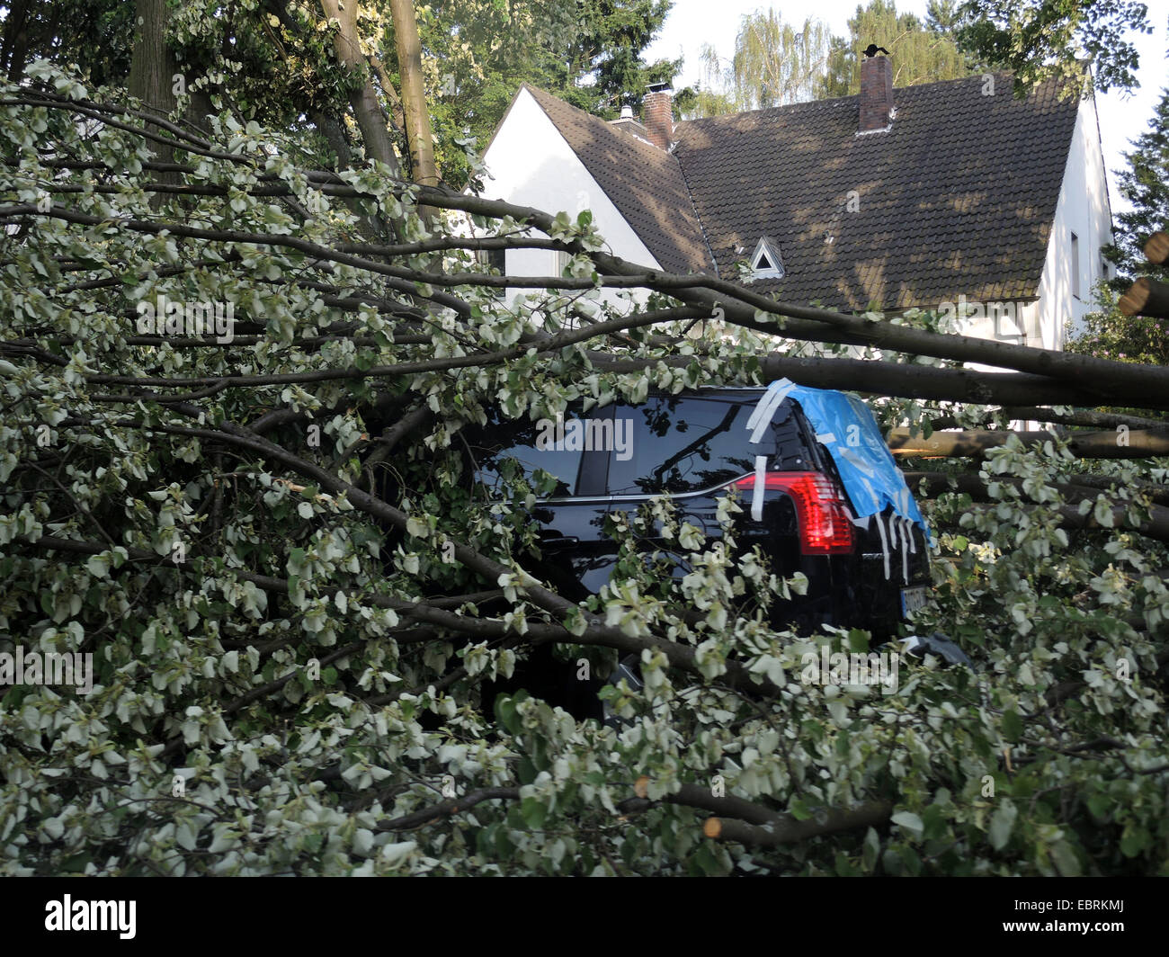 tree fallen on a parked car, damages by storm front Ela at 2014-06-09, Germany, North Rhine-Westphalia, Ruhr Area, Stock Photo