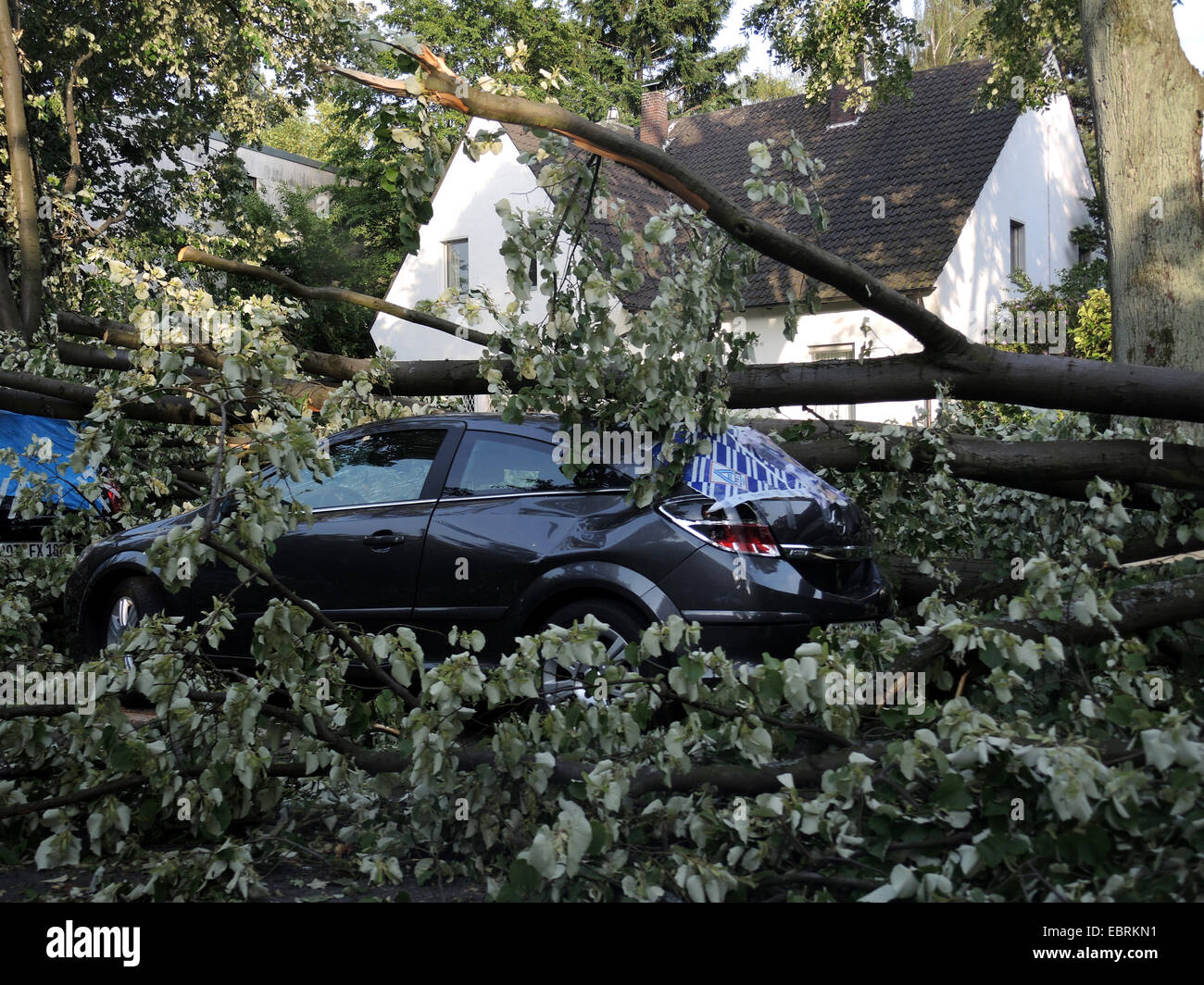 tree fallen on a parked car, damages by storm front Ela at 2014-06-09, Germany, North Rhine-Westphalia, Ruhr Area, - Stock Image