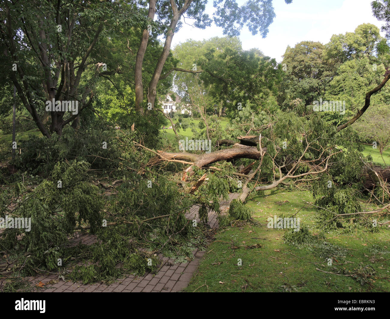 common ash, European ash (Fraxinus excelsior), ravaged city park of Bochum by fallen trees and broken branches, - Stock Image