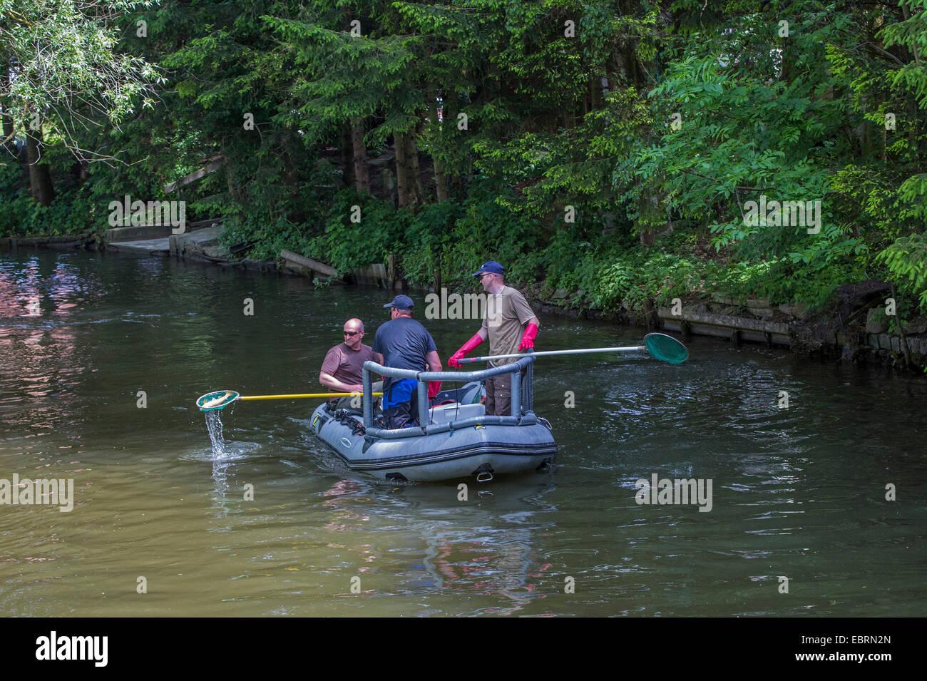 electrofishing, stock control for EU Water Framework Directive, Germany, Bavaria, Fluss Dorfen - Stock Image