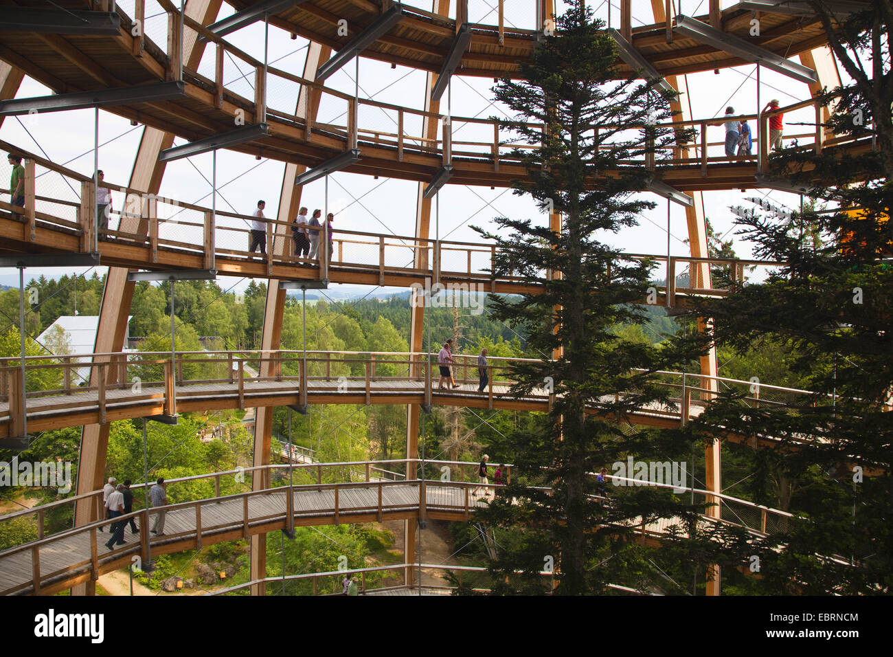 Viewing Tower of the Tree top walk in National Park Bavarian Forest, Germany, Bavaria, Bavarian Forest National - Stock Image
