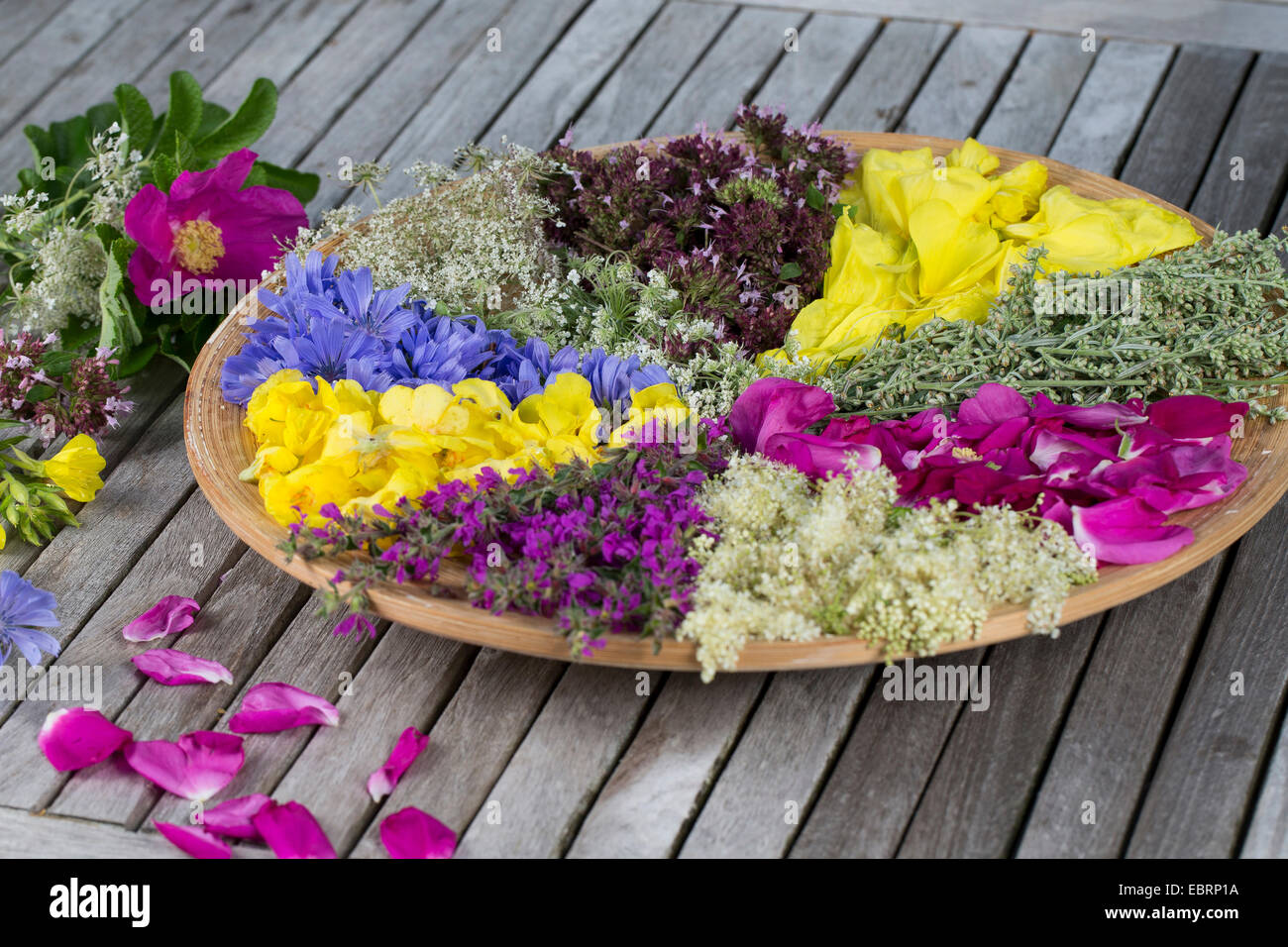 sorted blossoms drying on a plate - Stock Image