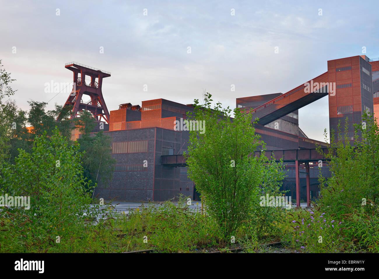 Zeche Zollverein at dawn, Germany, North Rhine-Westphalia, Ruhr Area, Essen - Stock Image