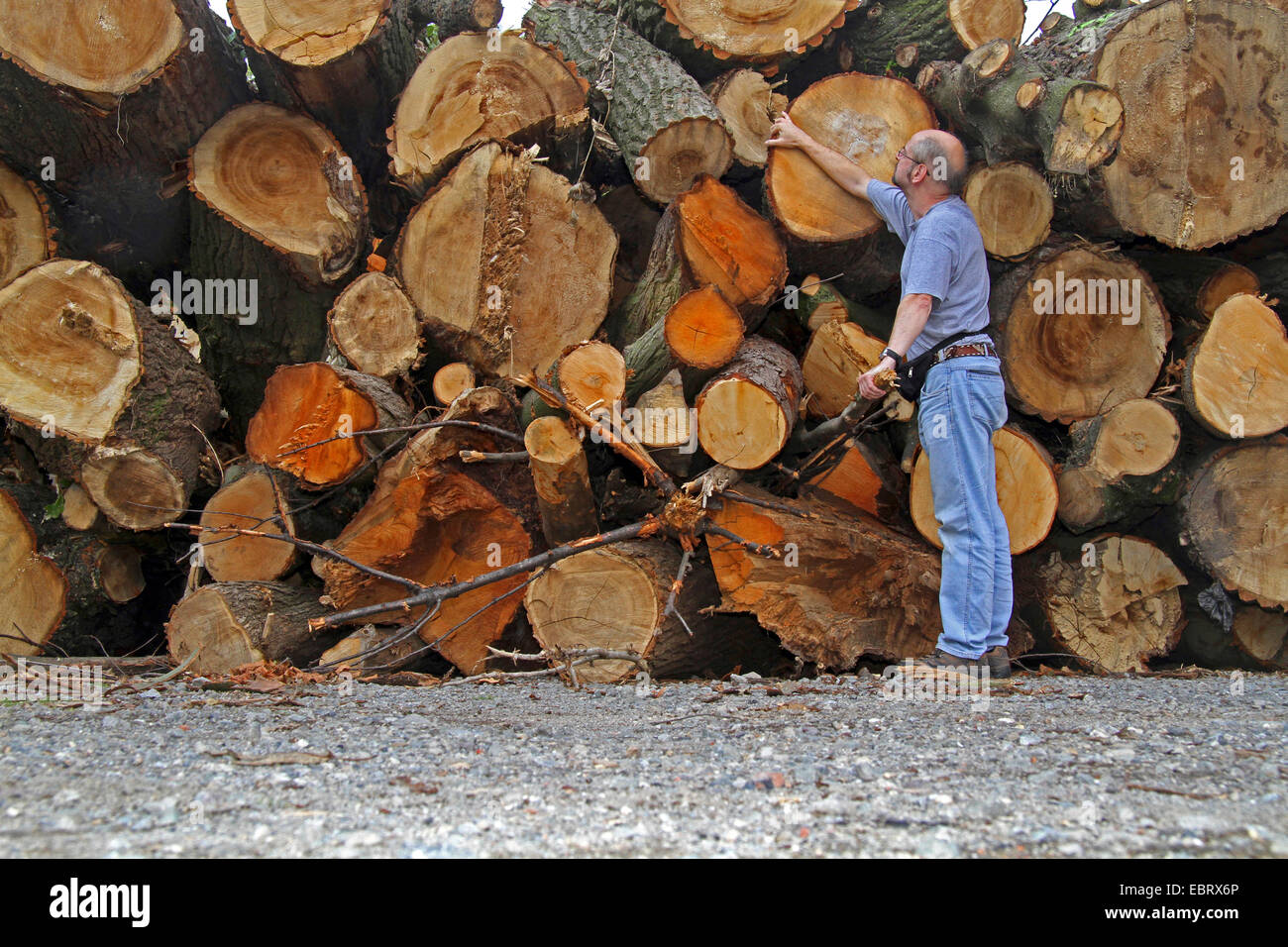 man standing in front of pile of wood, storm losses, Germany, North Rhine-Westphalia, Ruhr Area, Essen - Stock Image